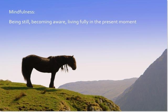 mindfulness horse